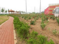 圣水湖畔沿支漳河绿化景观带(2013.08.20)