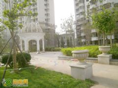 赵都新城5号地绿化(2012.8.10)