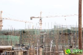 紫岸工程进度实景图(06.03)
