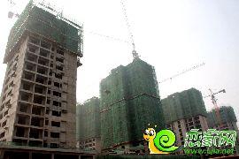 金百合项目东区实景图(2014.7.7)