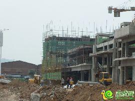 金百合项目东区实景图(2014.8.13)