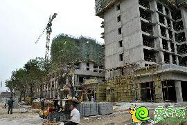 金百合西区实景图(2014.9.10)