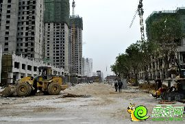 金百合实景图(2014.9.10)