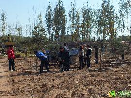 汉成华都东部防护林种植(2014.11.15)