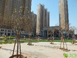汉成华都实景图(2014.11.15)