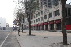 金百合实景图(2014.11.20)