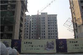 金百合实景图(2015.1.25)