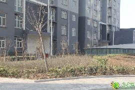 东方新城实景图(2015.02.14)