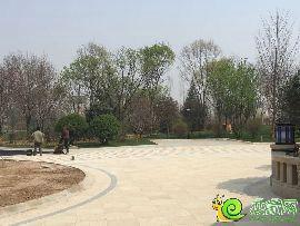 阳光东尚园林实景图(2015.4.1)