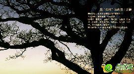 阳光东尚珍稀树木效果图