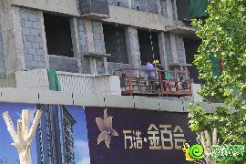 金百合实景图(2015.5.14)