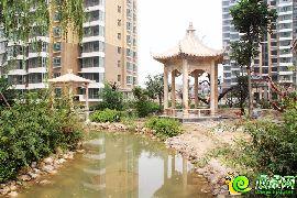 汉成华都园林实景图(2015.08.15)