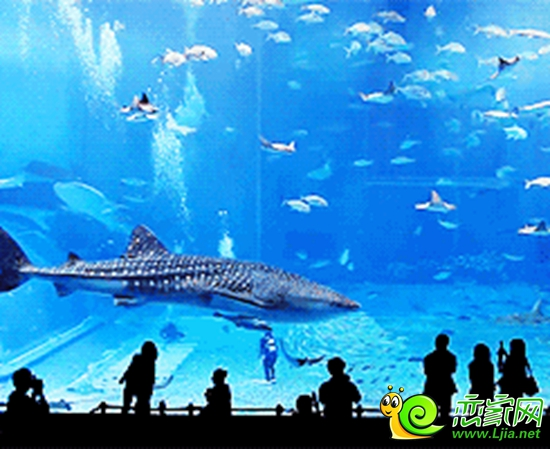 壁纸 海底 海底世界 海洋馆 水族馆 桌面 550_449
