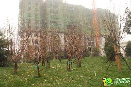 北湖十六峯工地实景图(2015.11.22)
