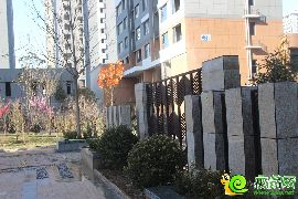 金百合东区实景图(已交房)