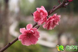 紫岸实景图(2016.4.2)