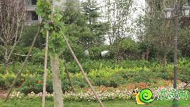 北湖十六峯园林美景