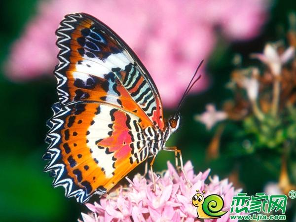 漫蝶飞舞・倾城之约 在冬季和蝴蝶有个美丽的邂逅!