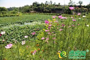"""""""泽信杯·复兴区沁河郊野生态公园"""" 健步行活动即将开始"""