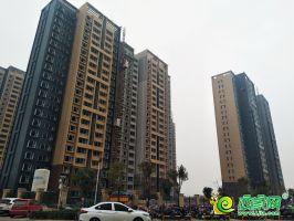 大年夜树康城实景图(2019.11.09)