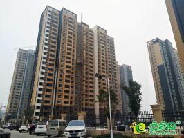 大树康城实景图(2019.11.09)