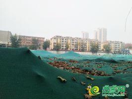 金御華府實景圖(2019.11.23)