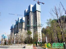 梦湖孔雀城(2020.3.29)