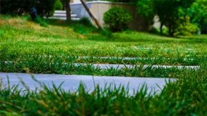 保集富椿·滏河源丨庭院·现代人性化的舒适居住方式