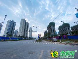 榮科楓林苑實景(2020.10.06)